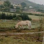 Horses near Brora Site